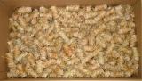 300 Stück Holz Ofen Kohle Anzünder